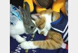 """매일 토끼 염탐하더니 똑같이 따라 하는 고양이..""""똑 닮았냥?"""""""