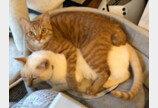 형 고양이에게 그루밍 받고 싶었던 아깽이..'3단 애교로 관심끌기 성공!'