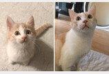 냥정수기 사용법 잘못 배운 고양이..'입으로 마시는지, 턱으로 마시는지'