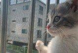 '엄마, 고양이 무섭다며'..딸 질투 나게 만든 엄마의 무한 냥이 사랑