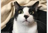 """볼일 본 뒤 화장실 위에서 '감자' 관찰하는 고양이..""""제발 그만 봐!"""""""