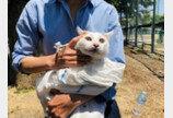 3백만명이 숨죽인 고양이 구출극..`어떻게 올라갔냥?`
