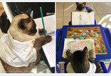 """일일 선생님된 꼬마 집사의 미술 수업 듣는 고양이들..""""참 쉽죠?"""""""