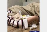 """비좁은 상자에 몸 구겨 넣다 '꽈당' 넘어진 고양이..""""체면 구겼다옹"""""""