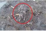 노르웨이 산사태에서 살아남은 개..`죽을 힘을 다해 헤엄쳤댕`