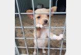 철제장 밖 바라보는 동물보호소 어린 강아지들