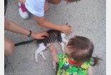인간사회에 적응하기엔  아직 시간이 더 필요한 고양이