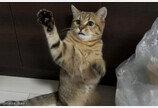 묘생 처음 캔 간식 먹고 충격받은 고양이..'그릇까지 먹을 기세'