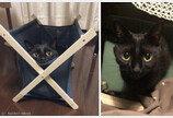 똥손집사 만나 고생 많은 고양이..묘생사진 꿈꾼 `굴욕사진 모음집`