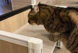 직원이 폭로(?)한 고양이 대표님의 실체..'조느라 일은 뒷전'