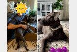 70발 산탄총세례 이겨낸 강아지, 새 가족과 크리스마스 보낸다!