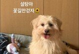"""윤보미, 숭늉이 이어 유기견 '설탕이' 임시 보호 시작..""""평생 가족 찾아주기 위해"""""""