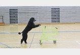 `안락사 위기` 공격적 강아지가 기네스 신기록 5개 달성한 `금발`로