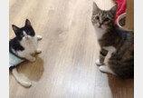 '한쪽 다리는 잃었지만'..집사 되어 달라고 솜방망이 내민 고양이