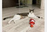 """인형 모임에 끼고 싶었던 '아싸' 고양이..""""첫인상은 임팩트 있게옹!"""""""
