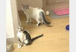 """집사가 TV보고 있자 셀프로 장난감 꺼낸 고양이..""""흥. 혼자 놀꺼다냥!"""""""