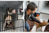 불구덩이 된 동물보호소 들어가 개·고양이 16마리 구조한 노숙자