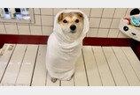 강아지 목욕으로 2020년 마무리한 영상 300만뷰..`평범한데 힐링되개`