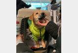 '이제 정말 안녕인데..' 미국 입양가는 강아지 눈물바람으로 배웅한 연예인