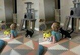 """무관심한 아가 집사 상대로 고독한 싸움하는 고양이..""""쳇, 어려서 봐준다냥!"""""""