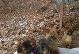 화재로 주인 잃은 어미 개와 5마리 강아지들..'한겨울 강추위 어찌 버틸지'