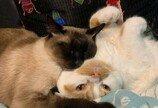 '냥이는 머리 쿵, 집사는 심쿵'..귀차니즘 고양이가 잘 준비하는 법