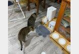 """밥그릇 점령한 뽀시래기에 집사 째려본 고양이..""""쟤 좀 말려봐!"""""""