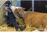 아일랜드·프랑스 쇠고기 국민 식탁 오르나…수입허용 절차 진행