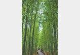 대숲 향기에 취하고 竹林別曲 영산강 풍류에 빠져들다