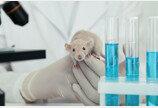 셀트리온, 쥐 실험서 '렉키로나' 코로나19 남아공 변이 치료 효과 재확인