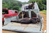 """용인 농장 탈출한 반달가슴곰은 1마리였다…""""1마리는 밀도축"""""""