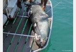 관광객들에 사랑받던 그리스 바다표범, 작살에 숨져