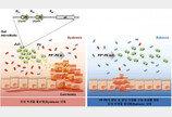 유산균인줄 알았던 '마이크로바이옴', 항암제로 변신 중