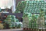 배추·무 가격 '강세 지속'…일반 채소류는 안정세 유지