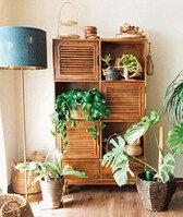 반려식물과 친해지는 플랜테리어 아이디어 7