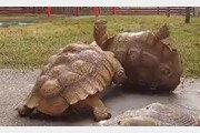 뒤집어진 친구 머리로 세워준 '의리의 거북이'