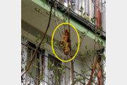 주민 공포에 떨게 한 나뭇가지 괴생명체…정체가?