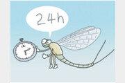 하루살이는 진짜 하루만 살까?[서광원의 자연과 삶]〈38〉
