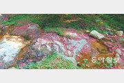 [김화성 전문기자의 &joy]담양 명옥헌에서 '여름의 끝자리'를 보다