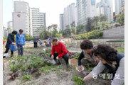 [수도권/메트로 스케치]삭막했던 아파트촌, 160개 텃밭에 핀 '웃음꽃'