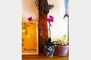 [오경아의 정원의 속삭임]난초, 신비로운 지구의 강자