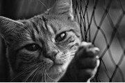 동물애호가의 이중생활..`밤엔 고양이 도살자`