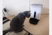 [히로미의 고양이 일기]<6>고양이가 먹으면 안되는 음식들
