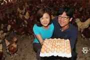 밀집사육 벗어난 닭 '황금알'을 낳다