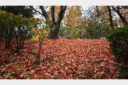 [강판권의 나무 인문학]꽃처럼 아름다운 낙엽
