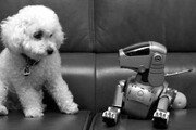 [이종승 전문기자의 사진 속 인생]우리집 쭈쭈 犬생사진 찍기
