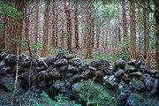 쉬멍 걸으멍∼ 돌담 너머 숲길향… 서귀포 숲길