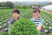강남에서 농사? 서울서도 쌀-채소-화훼 다 지어요
