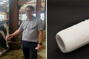 젖소 체온-운동량 온라인 체크… 질병 막고 최상급 우유 생산