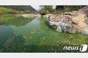 """보 개방 금강·영산강 녹조 95% 이상 줄었다…""""개방 늘려야"""""""
